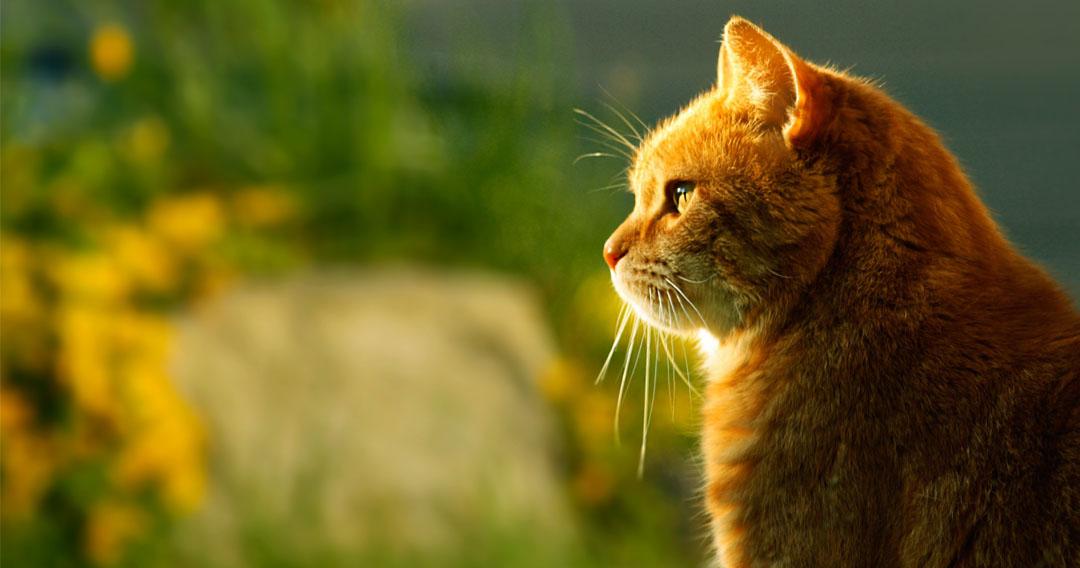 cat-318765-1080x568